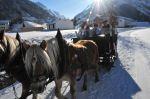winter_spferdeschlittenfahrten_02